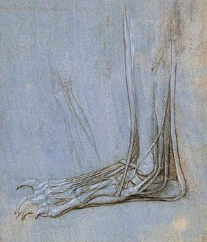 Reproduction oil paintings - Leonardo Da Vinci - The anatomy of a foot