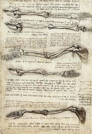 Reproduction oil paintings - Leonardo Da Vinci - Studies of the Arm showing the Movements made by the Biceps