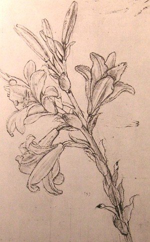 Reproduction oil paintings - Leonardo Da Vinci - Drawing of lilies, for an Annunciation