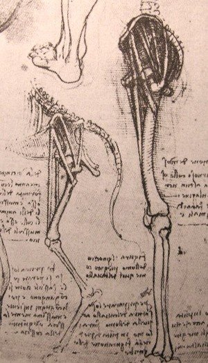 Reproduction oil paintings - Leonardo Da Vinci - Drawing of the comparative anatomy of the legs of a man and a dog