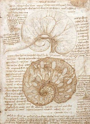 Reproduction oil paintings - Leonardo Da Vinci - Drawing of the uterus of a pregnant cow