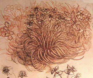 Reproduction oil paintings - Leonardo Da Vinci - Drawing of a botanical study