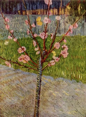 Reproduction oil paintings - Vincent Van Gogh - Almond Tree In Blossom