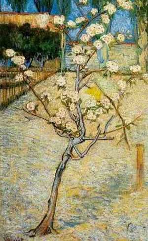 Reproduction oil paintings - Vincent Van Gogh - Blossoming Pear Tree