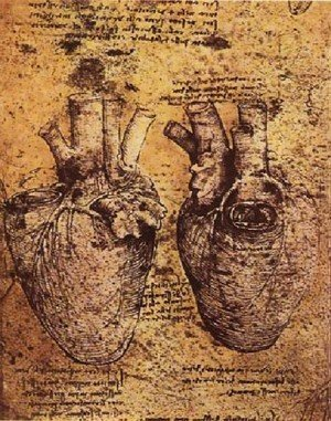 Reproduction oil paintings - Leonardo Da Vinci - Heart And Its Blood Vessels