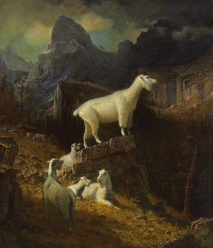 Reproduction oil paintings - Albert Bierstadt - Rocky Mountain Goats