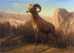Reproduction oil paintings - Albert Bierstadt - A Rocky Mountain Sheep  Ovis  Montana