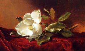 Hudson River School painting reproductions: A Magnolia On Red Velvet
