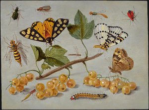 Butterflies and Insects c. 1655