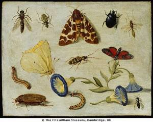 Famous paintings of Insects: Insects
