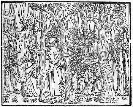 Poliphilus in a Wood 1499 by Aldus Manutius - Reproduction Oil Painting