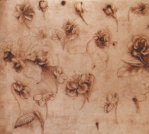 Reproduction oil paintings - Leonardo Da Vinci - Flower Studies