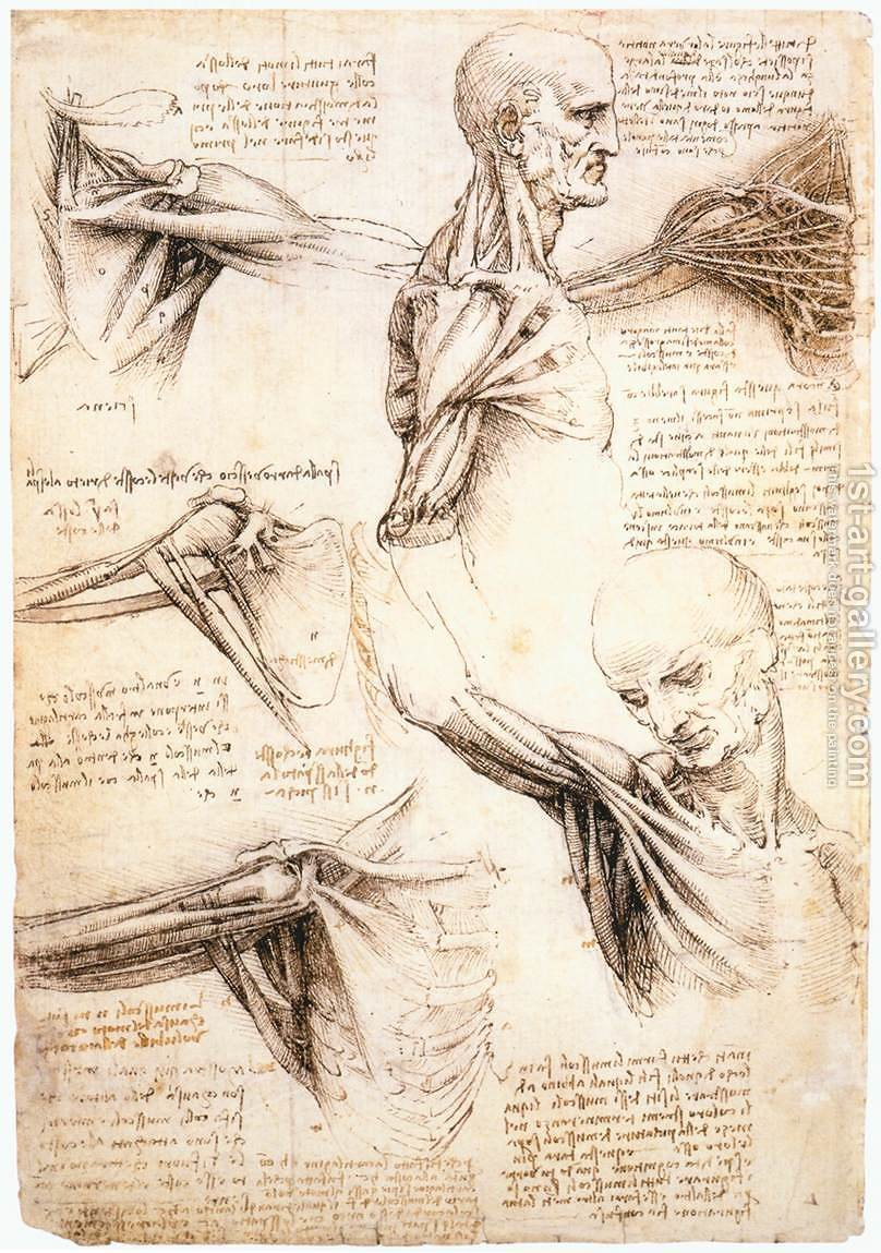 Anatomical studies of the shoulder Leonardo Da Vinci Reproduction ...