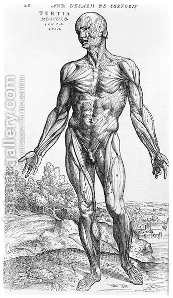 Anatomical Study, illustration from De Humani Corporis Fabrica by ...