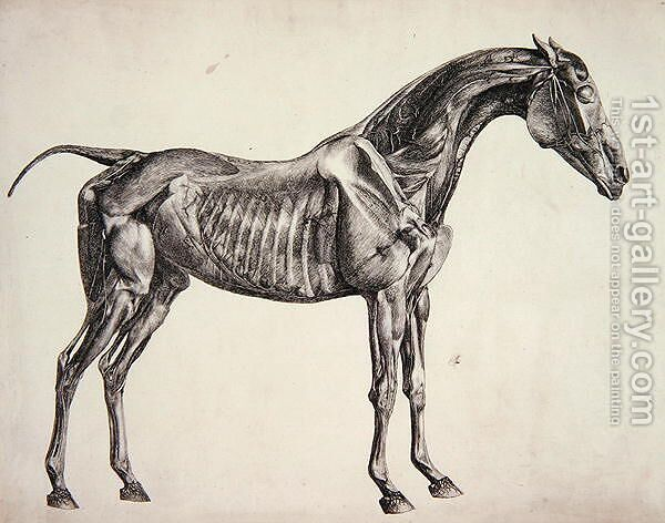 Plate From The Anatomy Of The Horse C1766 George Stubbs