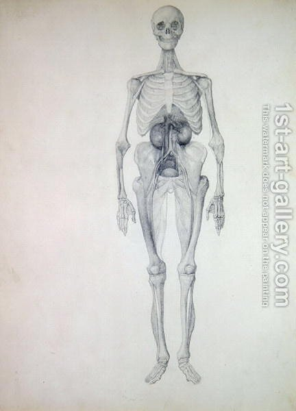 Study of the Human Figure, Anterior View, Final Stage of Dissection ...