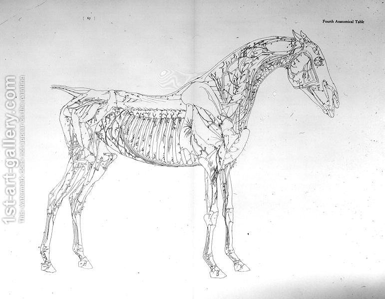 Fourth Anatomical Table From The Anatomy Of The Horse George Stubbs