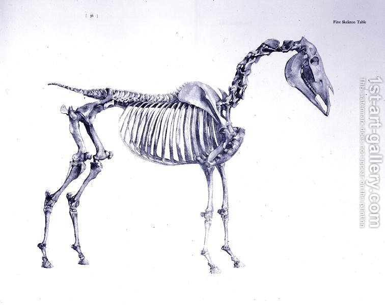First Skeleton Table From The Anatomy Of The Horse 2 George Stubbs