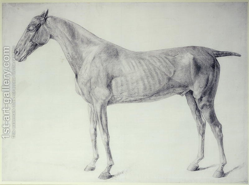 Diagram from The Anatomy of the Horse 2 George Stubbs Reproduction ...