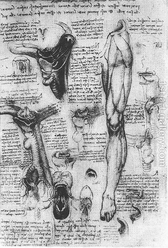 Anatomical Studies Larynx And Leg Leonardo Da Vinci Reproduction ...