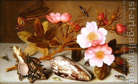 Still life depicting flowers, shells and a dragonfly by Balthasar Van Der Ast - Reproduction Oil Painting