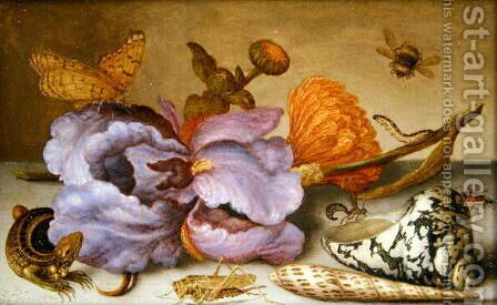 Still life depicting flowers, shells and insects by Balthasar Van Der Ast - Reproduction Oil Painting