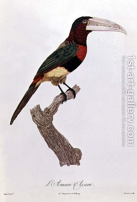 Azara Aracari by Jacques Barraband - Reproduction Oil Painting