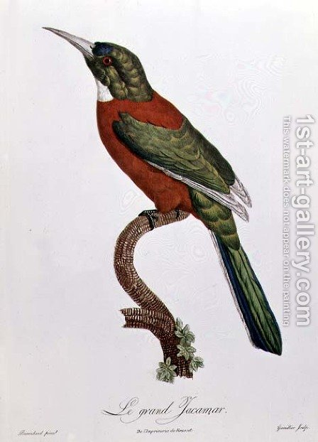 Great Jacamar by Jacques Barraband - Reproduction Oil Painting