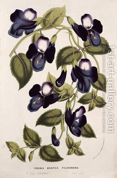 Torenia Asiatica pulcherrima, from 'Horto Van Houtteano' by Louis van Houtte by Anonymous Artist - Reproduction Oil Painting