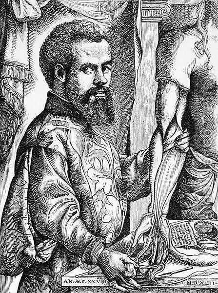 Portrait of Andreas Vesalius (1514-64) from his book 'De Humani Corporis Fabrica', 1543, illustration from 'Science and Literature in the Middle Ages and the Renaissance', 1878 by Jan Steven van Calcar - Reproduction Oil Painting