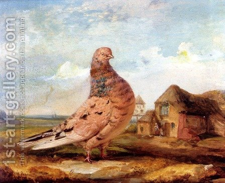 A Fancy Pigeon by James Ward - Reproduction Oil Painting