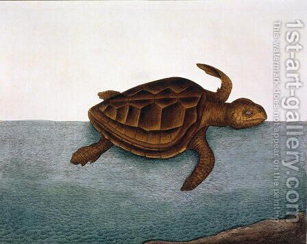 estudo marina (Loggerhead Turtle) plate 40 from Vol 2 of 'Natural History of Carolina, Florida and the Bahamas', 1771 by Mark Catesby - Reproduction Oil Painting