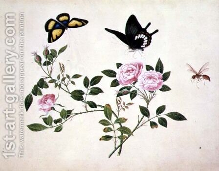 Roses in Bud and Bloom with Butterflies and Insects by Anonymous Artist - Reproduction Oil Painting