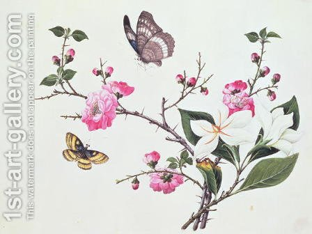 Japonica, Magnolia and Butterflies by Anonymous Artist - Reproduction Oil Painting