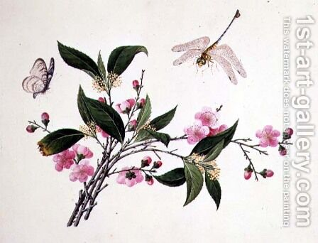 Cherry Blossom, Dragonfly and Butterfly by Anonymous Artist - Reproduction Oil Painting