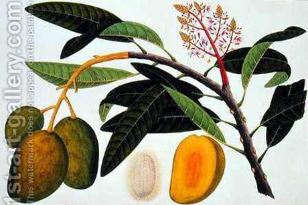 Buihang Mangifera, from 'Drawings of Plants from Malacca', c.1805-18 by Anonymous Artist - Reproduction Oil Painting