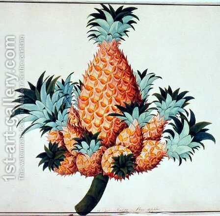 Nanas or Pineapple, from 'Drawings of Plants from Malacca', c.1805-18 by Anonymous Artist - Reproduction Oil Painting
