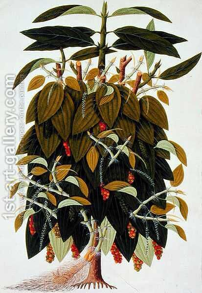 Lava Etam or Black Pepper, from Drawings of Plants from Malacca', c.1805-18 by Anonymous Artist - Reproduction Oil Painting