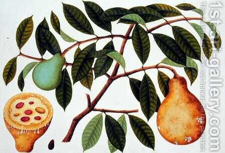Fruit, from 'Drawings of Plants from Malacca', c.1805-18 by Anonymous Artist - Reproduction Oil Painting