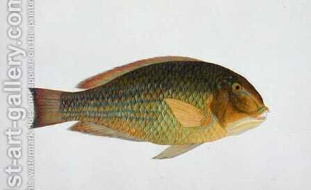 Eekan kaka-tooah, from 'Drawings of Fishes from Malacca', c.1805-18 by Anonymous Artist - Reproduction Oil Painting