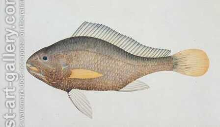 Eekan Jena, from 'Drawings of Fishes from Malacca', c.1805-18 by Anonymous Artist - Reproduction Oil Painting