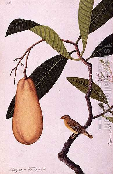 Binjay, Tampooah, from 'Drawings of Birds from Malacca', c.1805-18 by Anonymous Artist - Reproduction Oil Painting