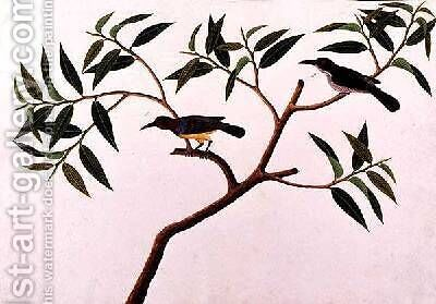 Humming Bird, Boorong cherichap, from 'Drawings of Birds from Malacca', c.1805-18 by Anonymous Artist - Reproduction Oil Painting