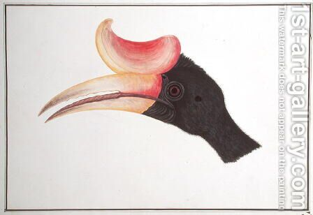 Head of a Bird, from 'Drawings of Birds from Malacca', c.1805-18 by Anonymous Artist - Reproduction Oil Painting