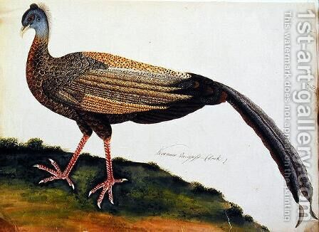 Koo auio Tangass - Cock, from 'Drawings of Birds from Malacca', c.1805-18 by Anonymous Artist - Reproduction Oil Painting