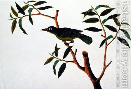 Bird in a Tree, from 'Drawings of Birds from Malacca', c.1805-18 by Anonymous Artist - Reproduction Oil Painting