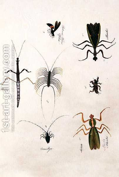 Phasma, Cerambyx, Sintado Mantis, Tabooan Tana Sphex, from 'Drawings of Animals, Insects and Reptiles from Malacca', c.1805-18 by Anonymous Artist - Reproduction Oil Painting