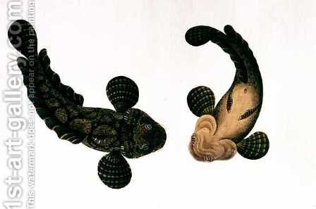Lepoo, from 'Drawings of Animals, Insects and Reptiles from Malacca', c.1805-18 by Anonymous Artist - Reproduction Oil Painting