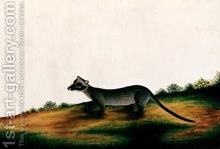 Furred Animal, from 'Drawings of Animals, Insects and Reptiles from Malacca', c.1805-18 by Anonymous Artist - Reproduction Oil Painting
