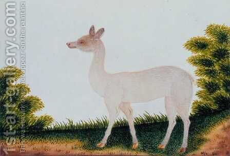 Furred Animal, from 'Drawings of Animals, insects and Reptiles from Malacca', c.1805-18 (3) by Anonymous Artist - Reproduction Oil Painting